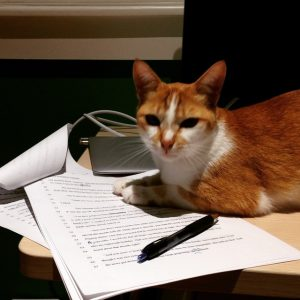 Write, revise, pet the cat, submit, repeat.